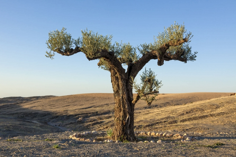Workshops Support Moroccan Olive Oil Sector